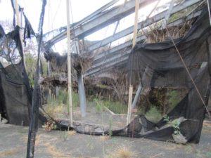 Imagen de una zona del Jardín Botánico del Descubrimiento (Foto Sí se puede)