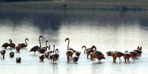 Parque Nacional de Doñana. Foto: EFE/Eduardo Abad