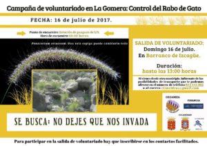 Campaña de voluntariado julio